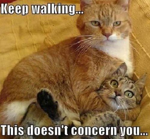 cat meme 3 index of wp content uploads 2012 10