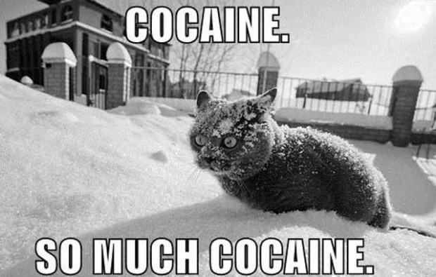 cat meme 4 index of wp content uploads 2012 10